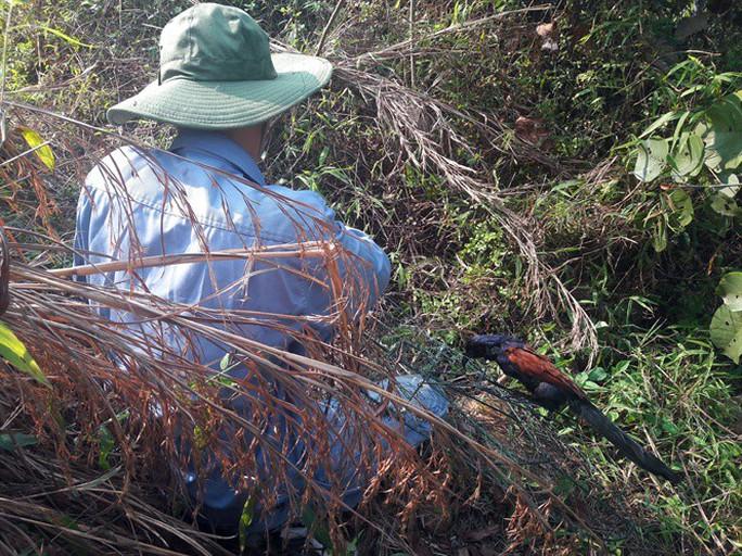 Xót xa thấy cảnh thợ săn tận diệt chim rừng mùa sinh sản - Ảnh 1.