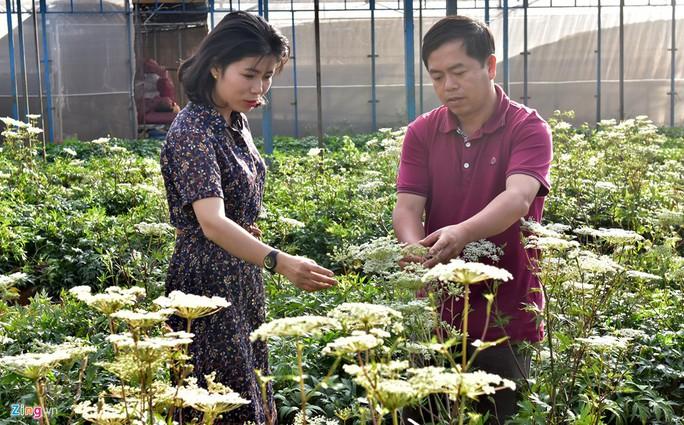 Nhà giàu đổ xô lên Măng Đen trồng rau sạch, thuốc quý - Ảnh 11.