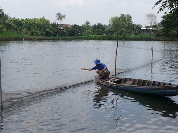 Nghịch lý cá tra tăng giá - Ảnh 1.