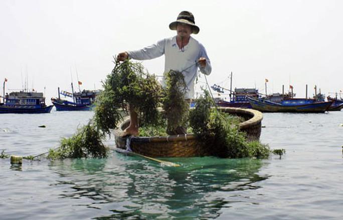 Ninh Thuận: Nông dân trúng mùa rong sụn, muối được giá - Ảnh 1.