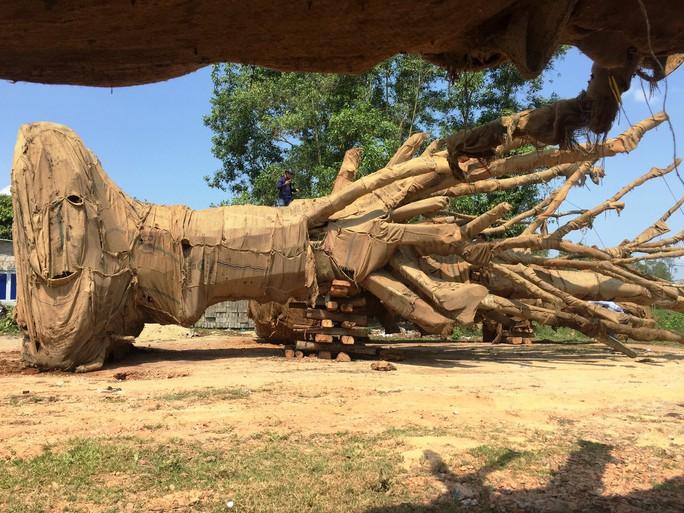 Cận cảnh 3 cây quái thú bị CSGT Thừa Thiên- Huế bắt giữ - Ảnh 3.