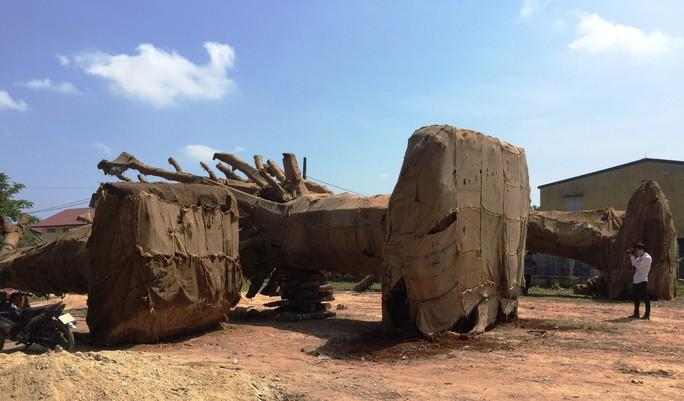Cận cảnh 3 cây quái thú bị CSGT Thừa Thiên- Huế bắt giữ - Ảnh 1.