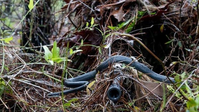 Bức ảnh rắn trườn ngang họng súng lính bắn tỉa gây sốt bất ngờ - Ảnh 1.