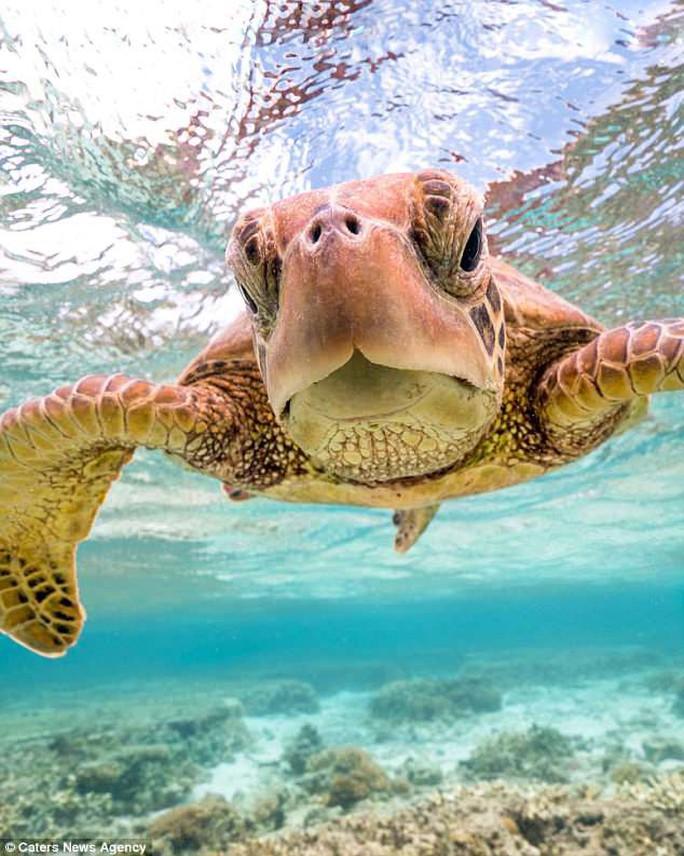 Bức ảnh chú rùa tỏ thái độ trước ống kính gây sốt bất ngờ - Ảnh 2.