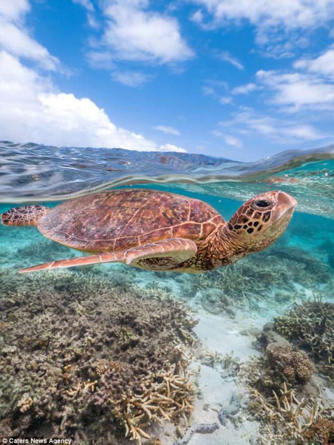 Bức ảnh chú rùa tỏ thái độ trước ống kính gây sốt bất ngờ - Ảnh 3.