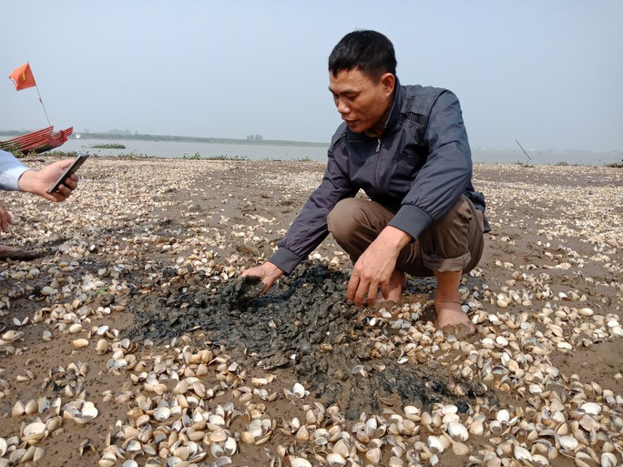 Dân điêu đứng vì hơn 90 tấn ngao chết bất thường - Ảnh 2.