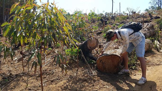 Gia Lai: Để mặc dân phá rừng - Ảnh 1.