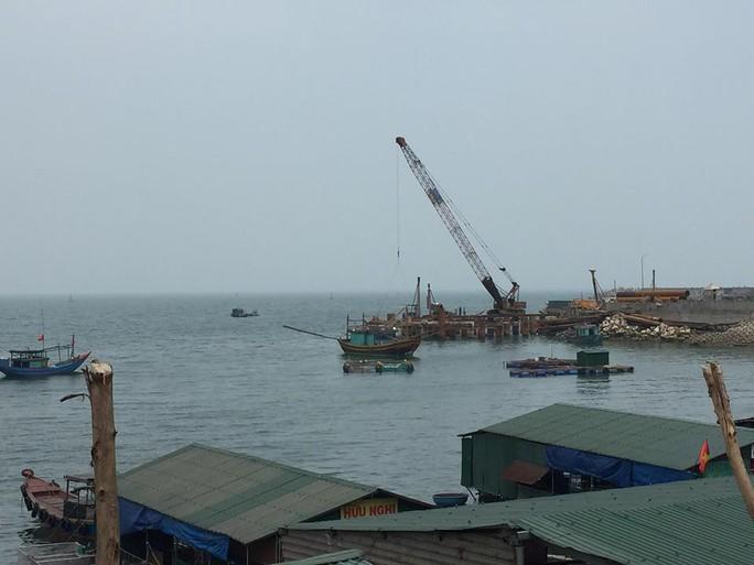 Cá, mực trong bè nổi ở khu vực cảng Vũng Áng chết bất thường - Ảnh 3.