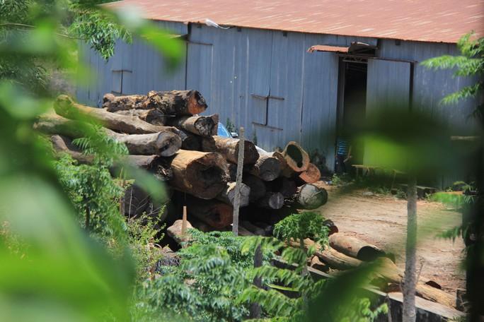Khám xét nhà, bắt khẩn cấp trùm gỗ lậu Phượng râu - Ảnh 1.