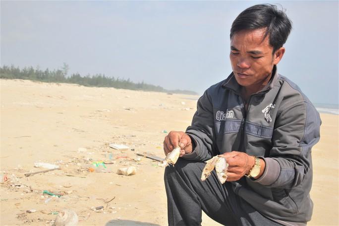 Cá chết dạt vào bờ biển Quảng Trị là do khai thác nổ mìn - Ảnh 3.