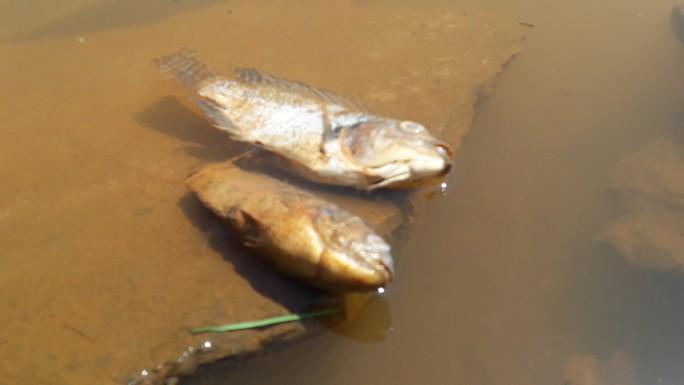 Đà Nẵng: Hơn 8km sông Cu Đê chuyển màu đỏ gạch, người dân lo lắng - Ảnh 5.