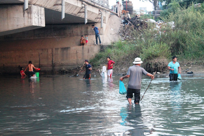 Không tìm ra thủ phạm chính vụ cá chết trắng sông Bàu Giang - Ảnh 2.