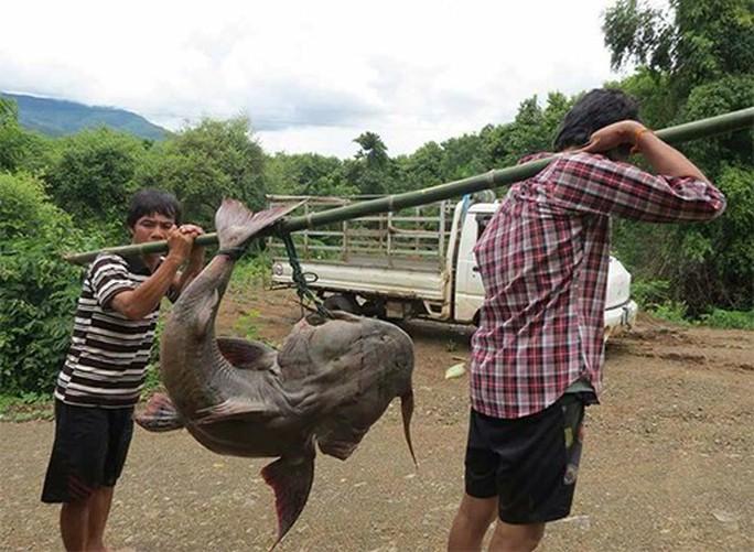 Quái ngư sông Đà và cuộc vật lộn ly kỳ giữa người và cá - Ảnh 1.