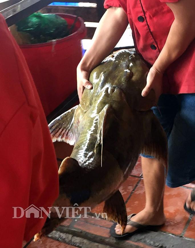 Quái ngư sông Đà và cuộc vật lộn ly kỳ giữa người và cá - Ảnh 5.