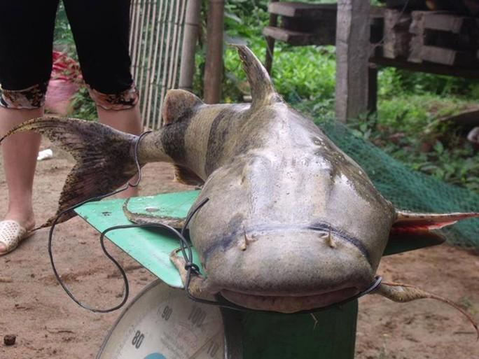 Quái ngư sông Đà và cuộc vật lộn ly kỳ giữa người và cá - Ảnh 2.