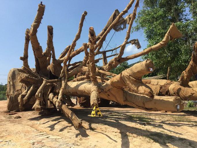 Phó Thủ tướng yêu cầu làm rõ xe chở cây quái thú có vi phạm luật không - Ảnh 1.