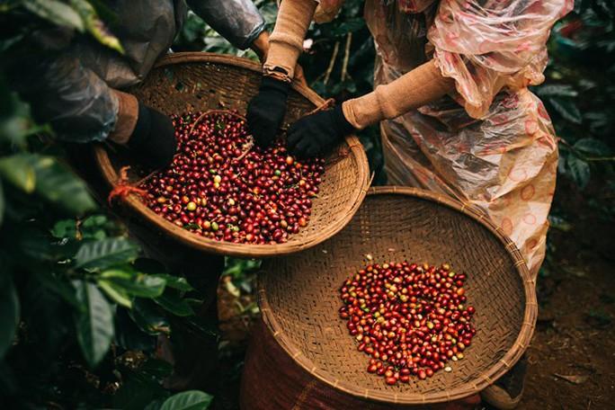 Thị trường cà phê Việt nằm trong tay ai? - Ảnh 3.