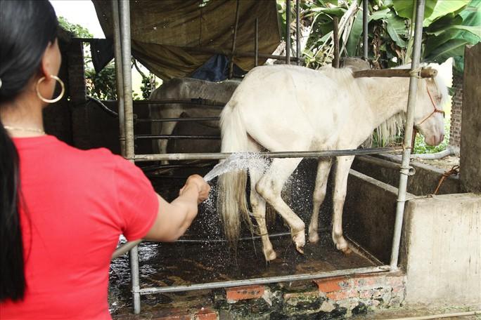 Nuôi ngựa bạch sắm nhà lầu, xe hơi ở Thái Nguyên - Ảnh 9.