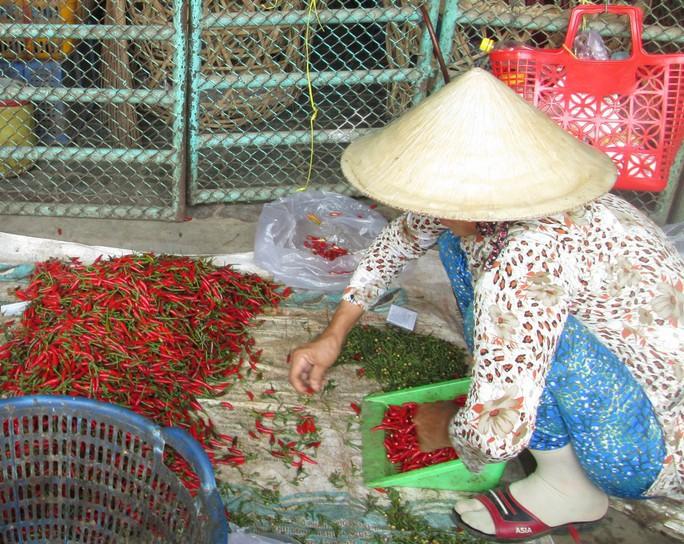 36,25% mẫu ớt bột, ớt khô nhiễm độc tố aflatoxin - Ảnh 1.
