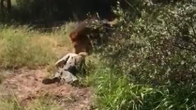 Vào chuồng sư tử, cụ ông bị cắn cổ kéo lê - Ảnh 2.