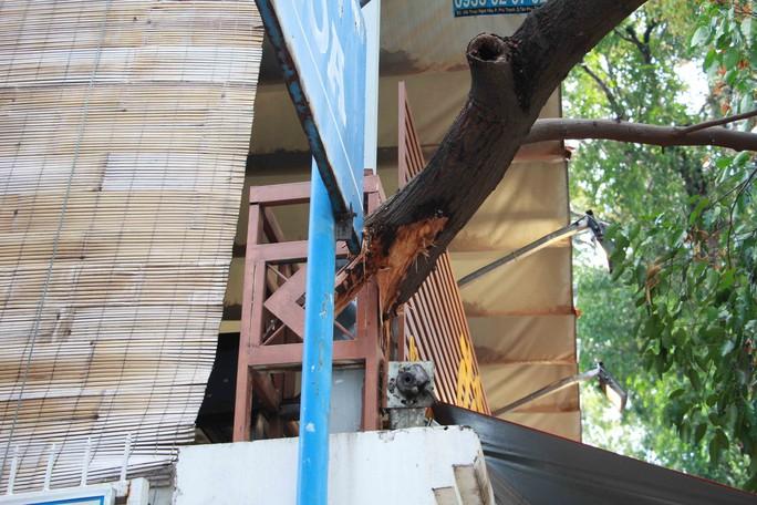 Nhánh cây xanh rớt xuống nhà dân trong cơn mưa chuyển mùa - Ảnh 2.