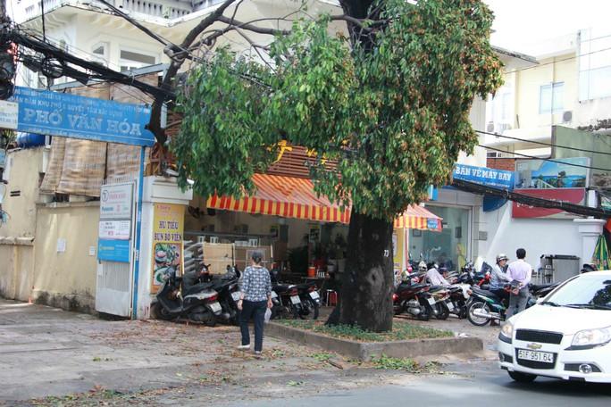 Nhánh cây xanh rớt xuống nhà dân trong cơn mưa chuyển mùa - Ảnh 1.