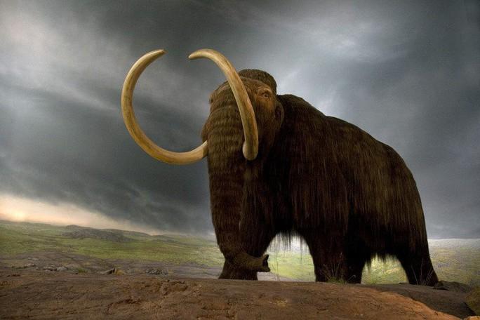 Tái sinh voi ma mút không ngà để cứu trái đất - Ảnh 1.