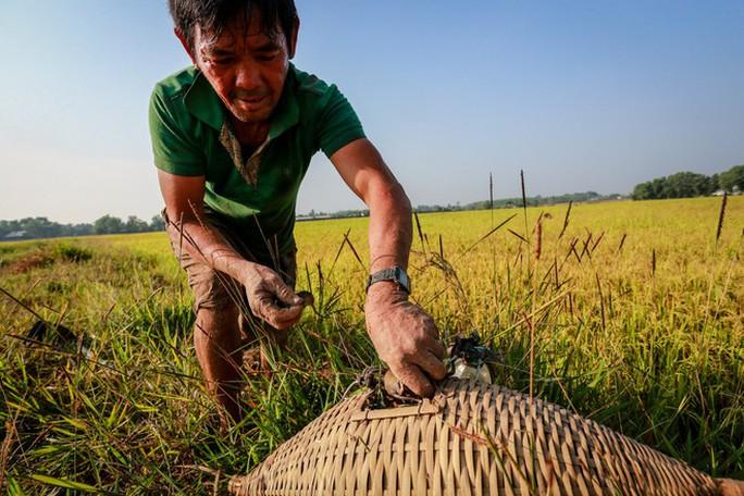 Cao thủ ngao du khắp Sài Gòn săn rắn, bắt chuột  - Ảnh 7.