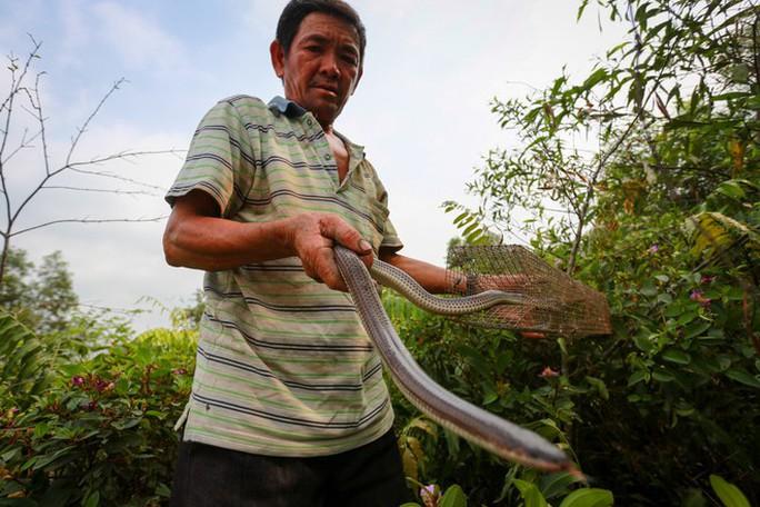 Cao thủ ngao du khắp Sài Gòn săn rắn, bắt chuột  - Ảnh 10.