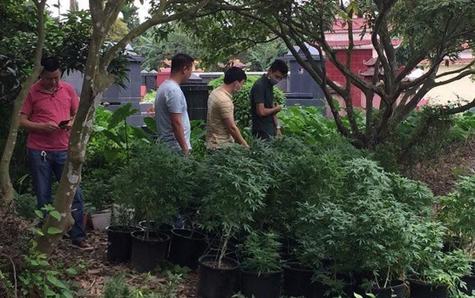 Phát hiện thành viên Hội thánh Đức Chúa Trời Mẹ trồng gần 1.000 cây cần sa - Ảnh 1.