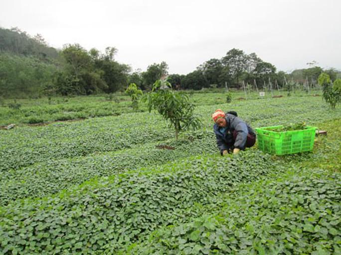 Nông nghiệp hữu cơ không chỉ có sạch - Ảnh 1.