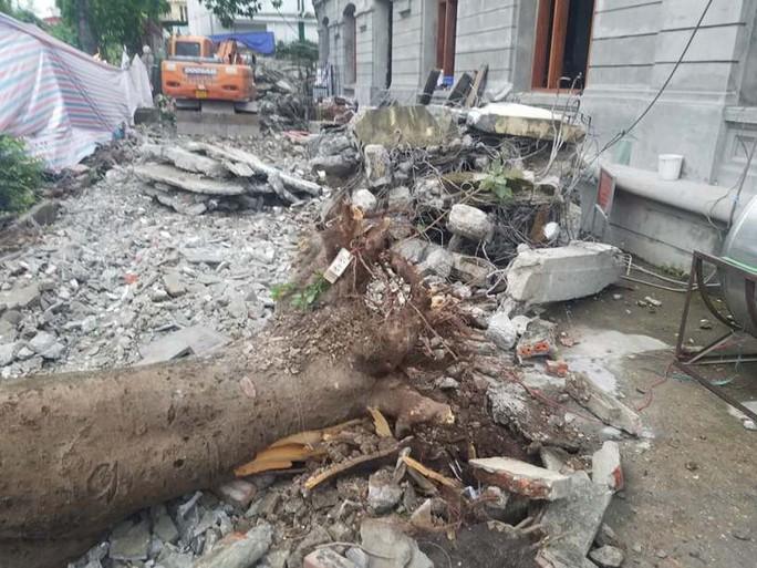 Hà Nội: Cây phượng bất ngờ đổ, đè ập lên 5 người đi đường - Ảnh 2.