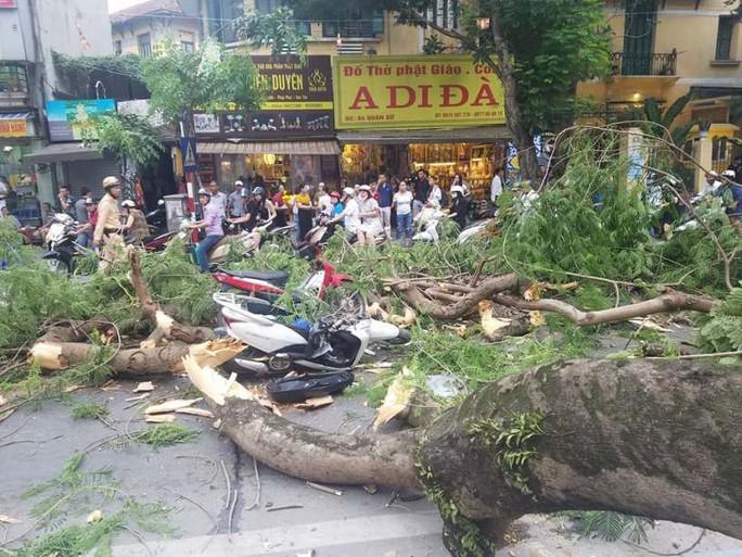 Hà Nội: Cây phượng bất ngờ đổ, đè ập lên 5 người đi đường - Ảnh 3.