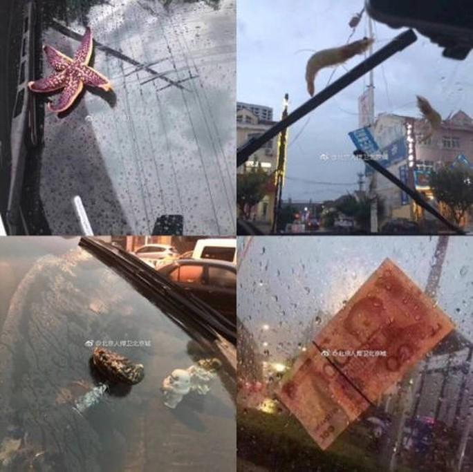 """""""Mưa"""" bạch tuộc, sao biển và tôm ở Trung Quốc - Ảnh 4."""