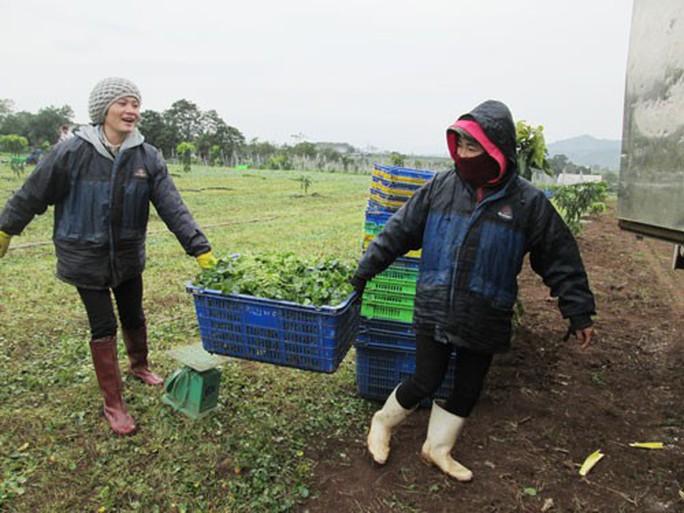 Tiêu chuẩn quốc gia về nông nghiệp hữu cơ: Vẫn còn trên giấy! - Ảnh 1.