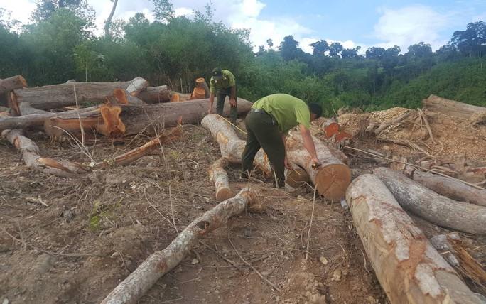 Ngang nhiên đưa máy múc vào phá rừng, sau nhiều ngày kiểm lâm mới biết - Ảnh 1.