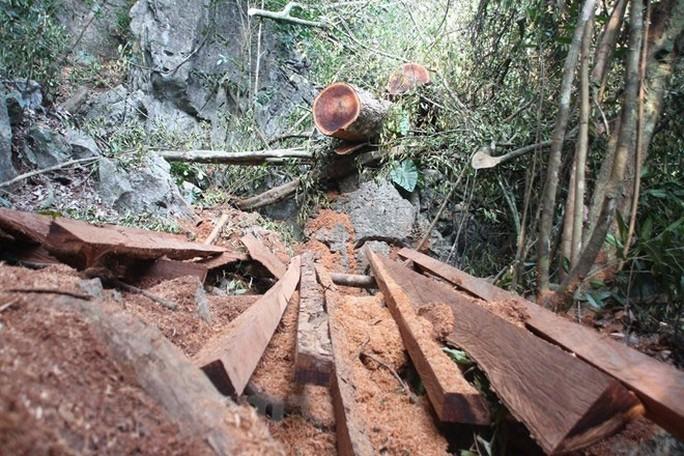 Buông lỏng quản lý, đất rừng bị xẻ thịt - Ảnh 1.
