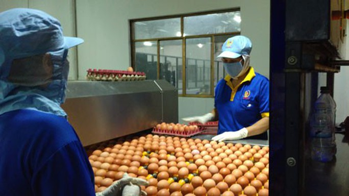 Giá trứng gà, vịt tăng kỷ lục - Ảnh 1.