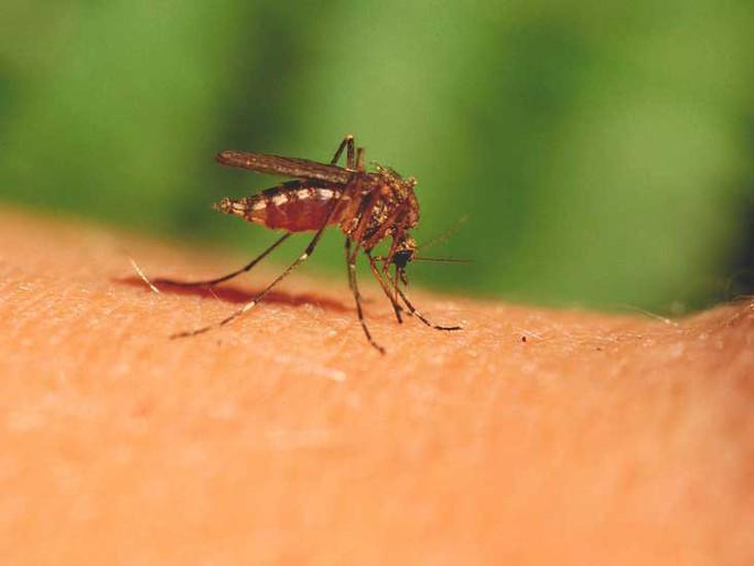 Cuộc yêu tử thần giúp con người thoát khỏi muỗi? - Ảnh 1.
