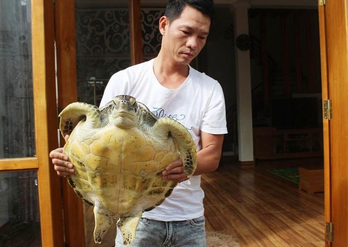 Thả rùa biển quý hiếm trong Sách đỏ về biển khơi - Ảnh 1.