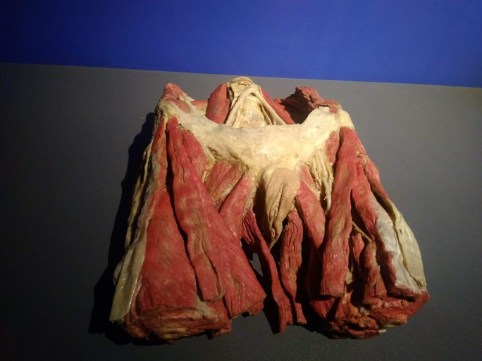 """""""Sự bí ẩn đặc biệt của cơ thể người"""": nghe người chết kể chuyện - Ảnh 4."""