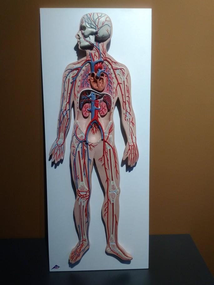 """""""Sự bí ẩn đặc biệt của cơ thể người"""": nghe người chết kể chuyện - Ảnh 5."""