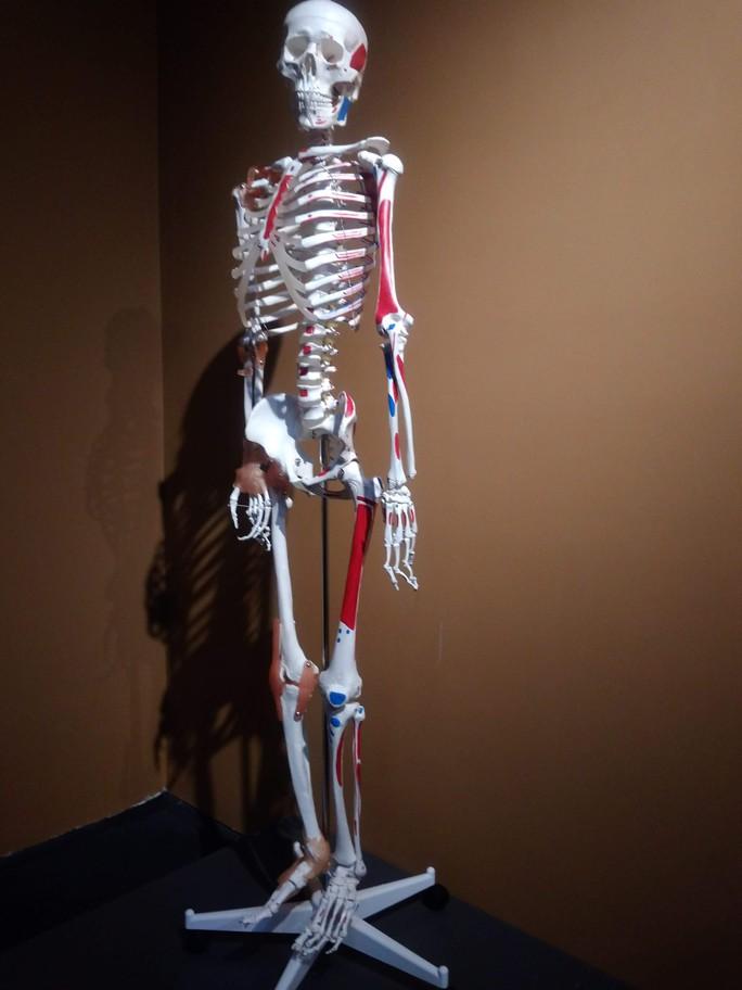 """""""Sự bí ẩn đặc biệt của cơ thể người"""": nghe người chết kể chuyện - Ảnh 6."""