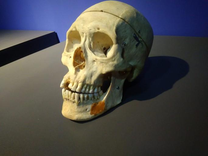 """""""Sự bí ẩn đặc biệt của cơ thể người"""": nghe người chết kể chuyện - Ảnh 11."""