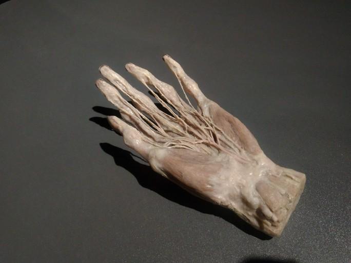 """""""Sự bí ẩn đặc biệt của cơ thể người"""": nghe người chết kể chuyện - Ảnh 14."""