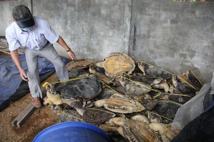 Vụ tàng trữ gần 7.000 xác rùa biển: Tòa bác áp dụng tình tiết giảm nhẹ - Ảnh 3.