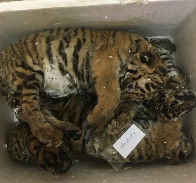 Bắt quả tang 5 con hổ đang vi vu trên xế hộp - Ảnh 1.