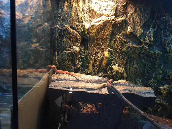 Vô tư nhập khẩu tắc kè, nhện, ếch bạc triệu làm thú cảnh - Ảnh 4.