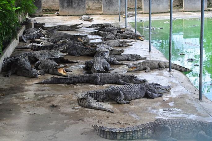 Người nuôi cá sấu được cứu - Ảnh 2.