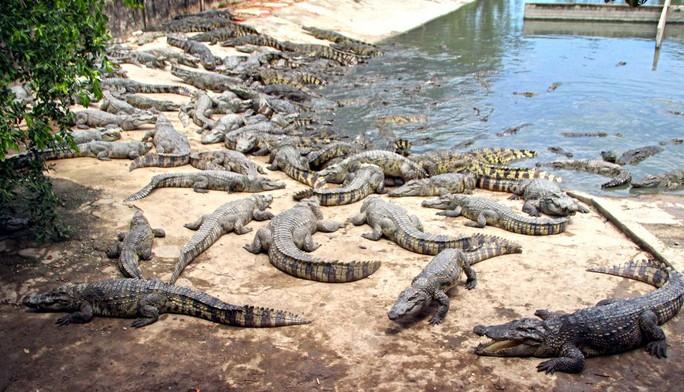 Người nuôi cá sấu được cứu - Ảnh 1.